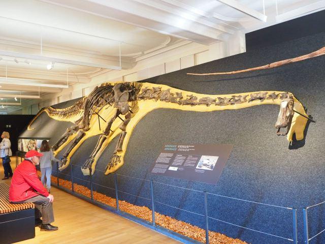 Der längste Dinosaurier: Diplodocus