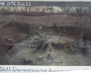 Ausgrabung von Dinosauriern in Tendaguru