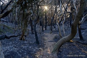 Folgen des Buschfeuers