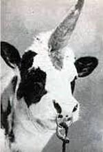 Portrait des Unibulls