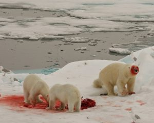 Eisbärin mit Jungen