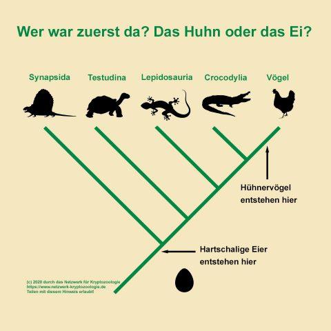 """Stammbaum der """"Mantelreptilien"""" und verwandter Gruppen"""