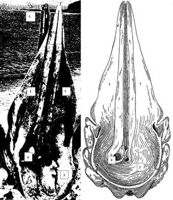 Der Medano und ein Pottwalschädel