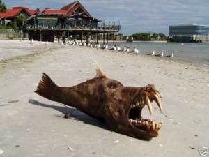 Tampa Sea Monster