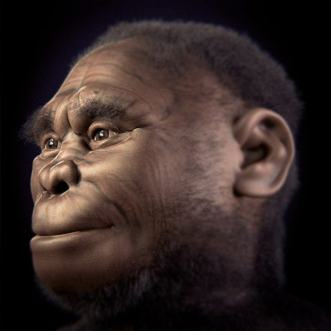 Rekonstruktion des Homo floresiensis