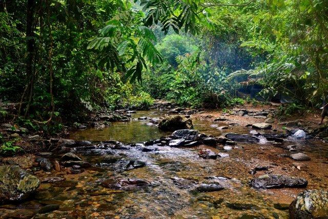 Primärwald Sumatra