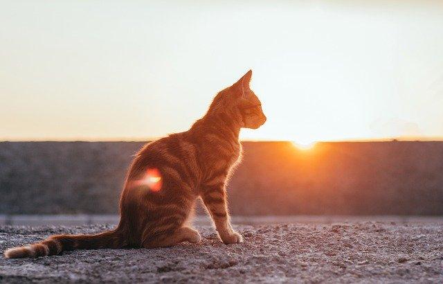 Katzen gehen, wohin sie wollen