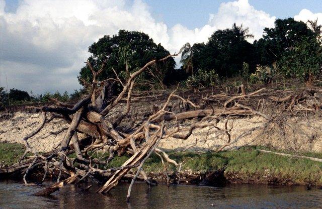 Uferböschung Südamerika