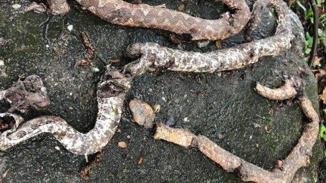 tote schlangen