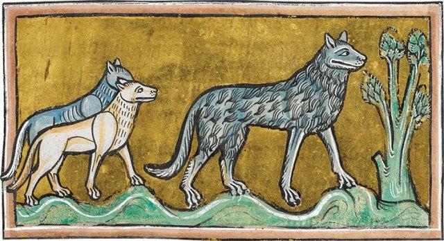 Wölfe aus dem Rochester Bestiary, 1230