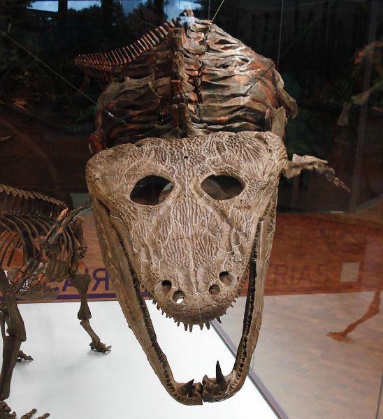 Mastodonsaurus-Fossil