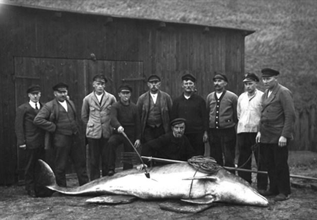 Der erlegte Tümmler aus dem Nord-Ostsee-Kanal