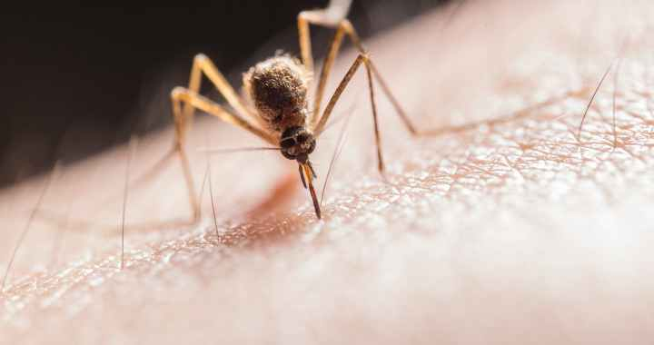 World Health Organization Starts Distribution of the World's First Malaria Vaccine