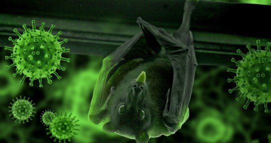 Bats Act as Massive Reservoirs of Viruses