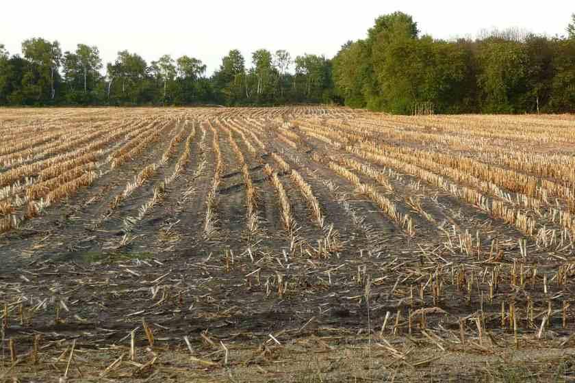 Dokumentarfilm: Tödliche Agri Kultur – Wie Monsanto die Welt vergiftet