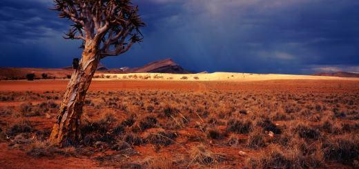 Landschaft im afrikanischen Namibia. (Foto: Johnny Chen; Unsplash.com)