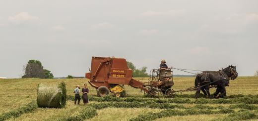 Traditionelle Landwirtschaft existiert heute nicht mehr. (Foto: Vladimir Kudinov, Unsplash.com)