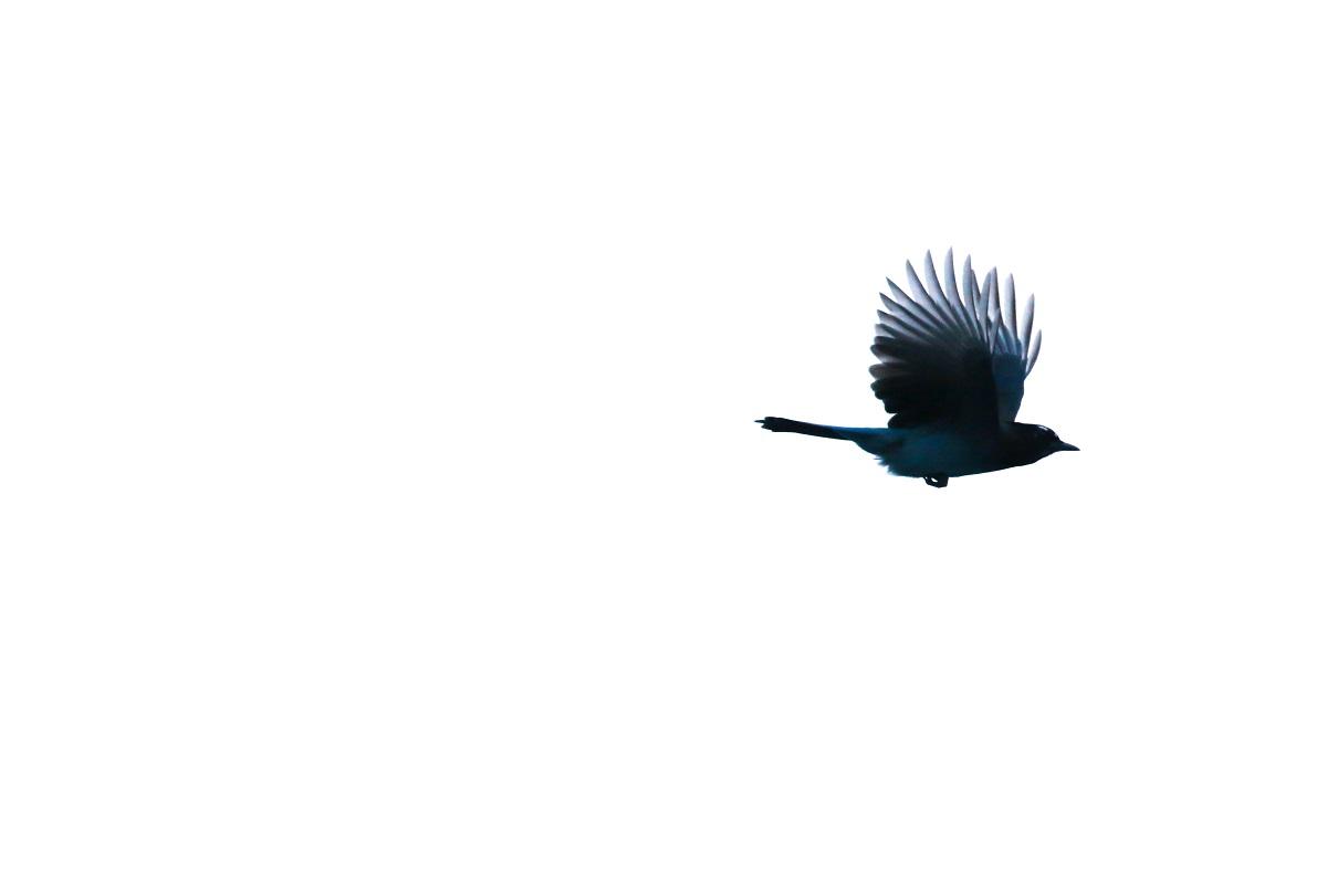 Frei wie ein Vogel. Flying Bird. (Foto: Patrick Hendry, Unsplash.com)