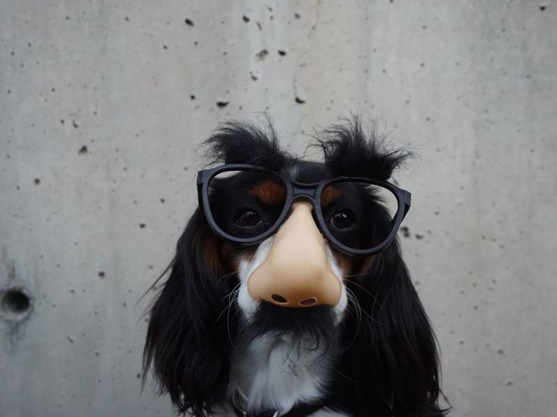 Hund mit lustiger Maskierung. (Foto: Braydon Anderson, Unsplash.com)