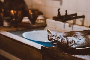 Tote Kaninchen in einer Küche. (Foto: Annie Spratt, Unsplash.com)