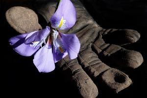 Blume und Arbeiterhandschuhe als Symbol für oppositionelle Betriebsgruppe GoG. (Foto: Beverly Buckley, Pixabay.com, Creative Commons CC0)