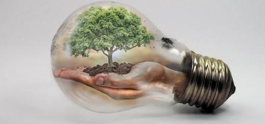 Glühbirne mit Baum. (Illustration: Iván Tamás, Pixabay.com, Creative Commons CC0)