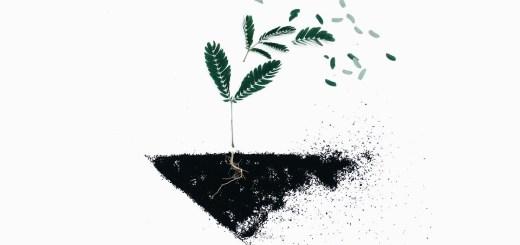 Pflanze wird weggepustet. (Foto: Evie Shaffer, Unsplash.com)