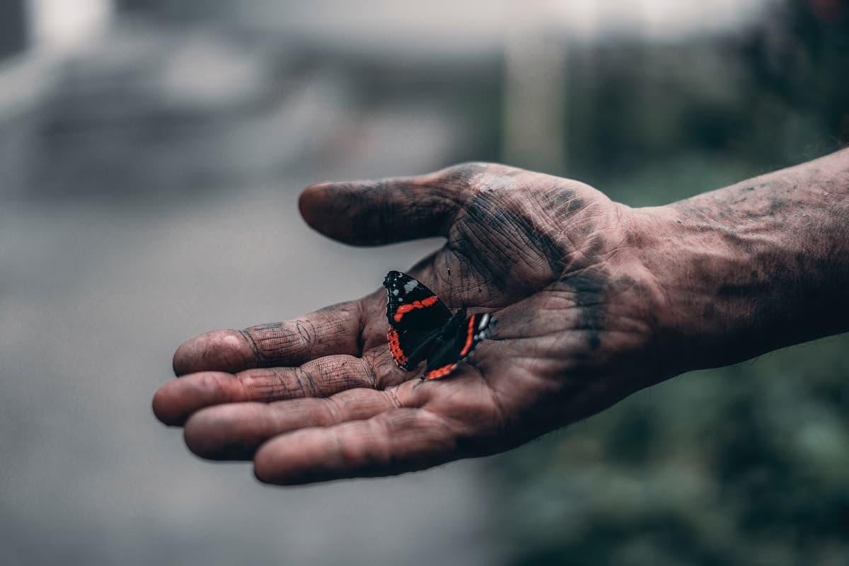 Erwachsene nehmen auch Schmetterlinge in die Hand. (Foto: Elijah O'Donnell Unsplash.com)