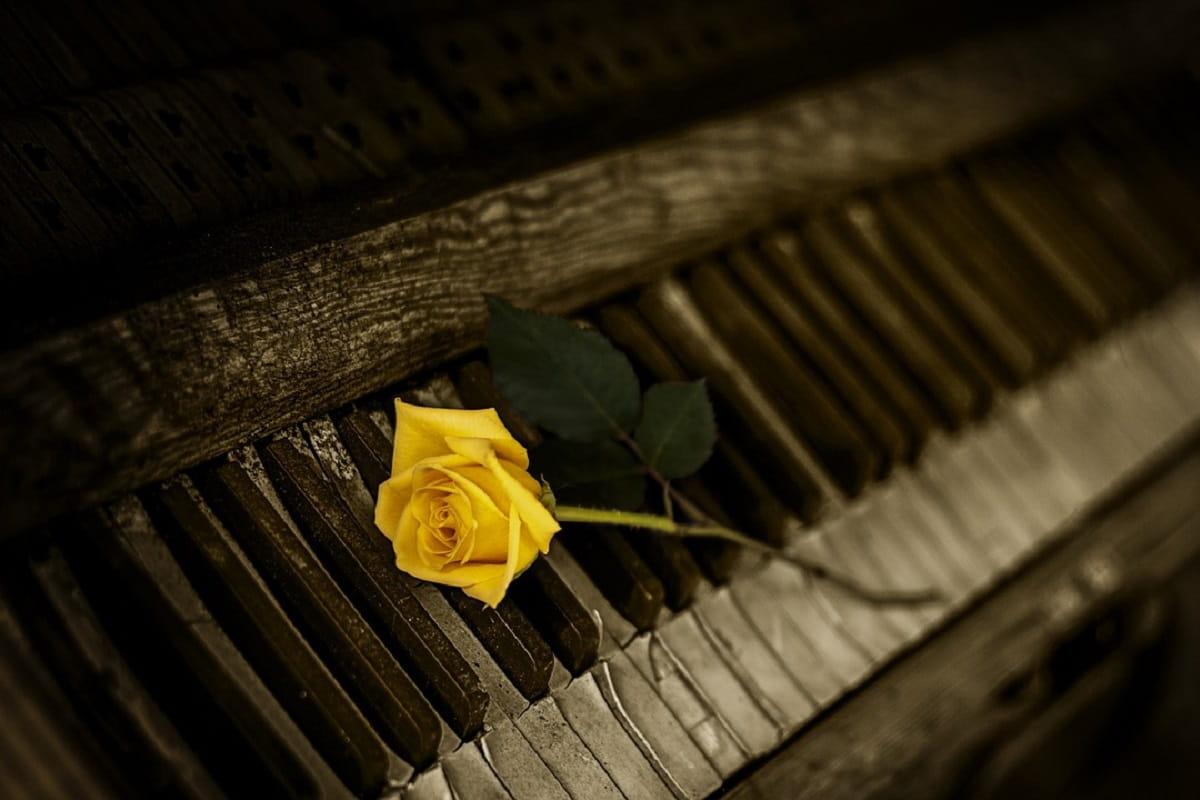 Gelbe Rose auf einem altem Klavier. (Foto: Martyn Cook, Pixabay.com- Creative Commons CC0)