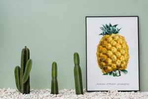 Showdown! Kaktus oder Ananas? (Foto: Rawpixel, Unsplash.com)