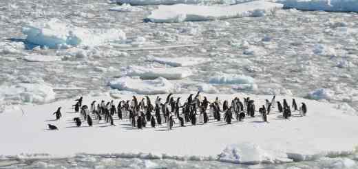 Das Leben der Pinguine findet nicht auf einer Eisscholle statt. (Foto: Danielle Barnes, Unsplash.com)