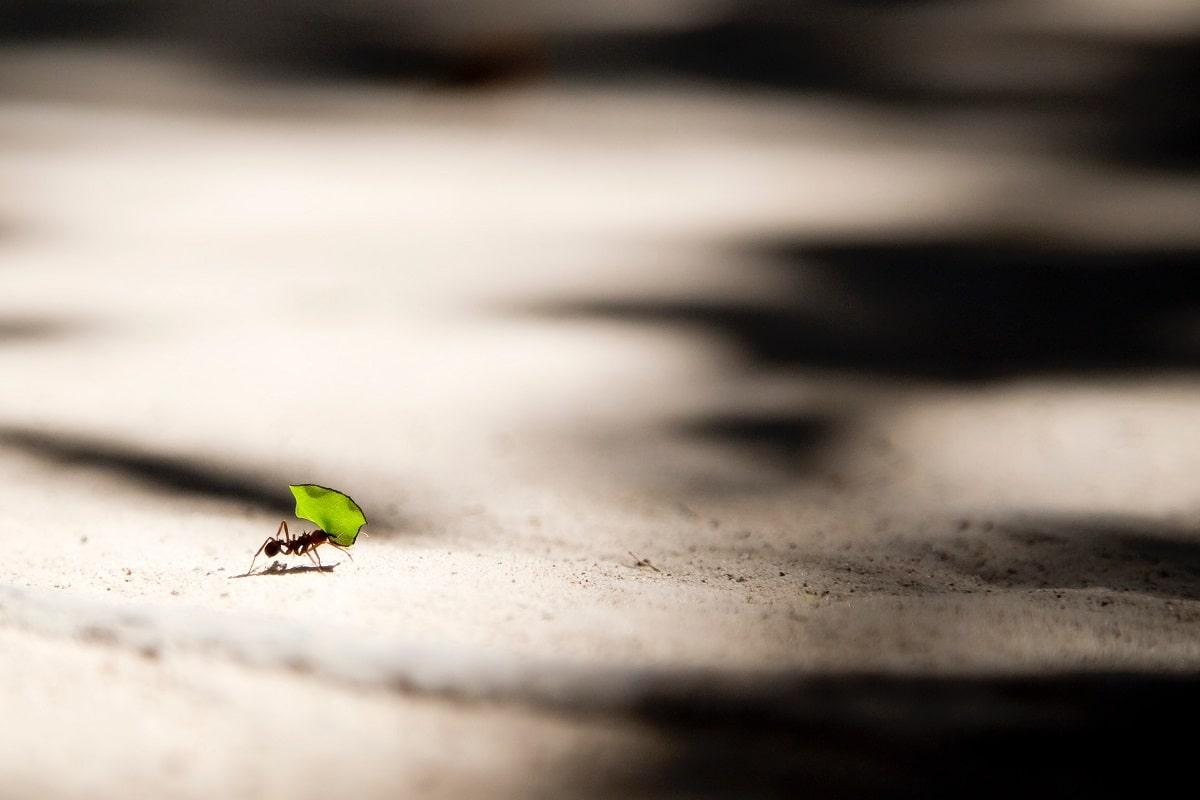 Die letzte Chance bietet sich jeder Ameise. (Foto: Vlad Tchompalov, Unsplash.com)