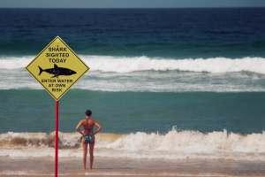 Haie an der Küste Australiens lösen keine Krise aus, sondern Aufmerksamkeit. (Foto: Lubo Minar, Unsplash.com)