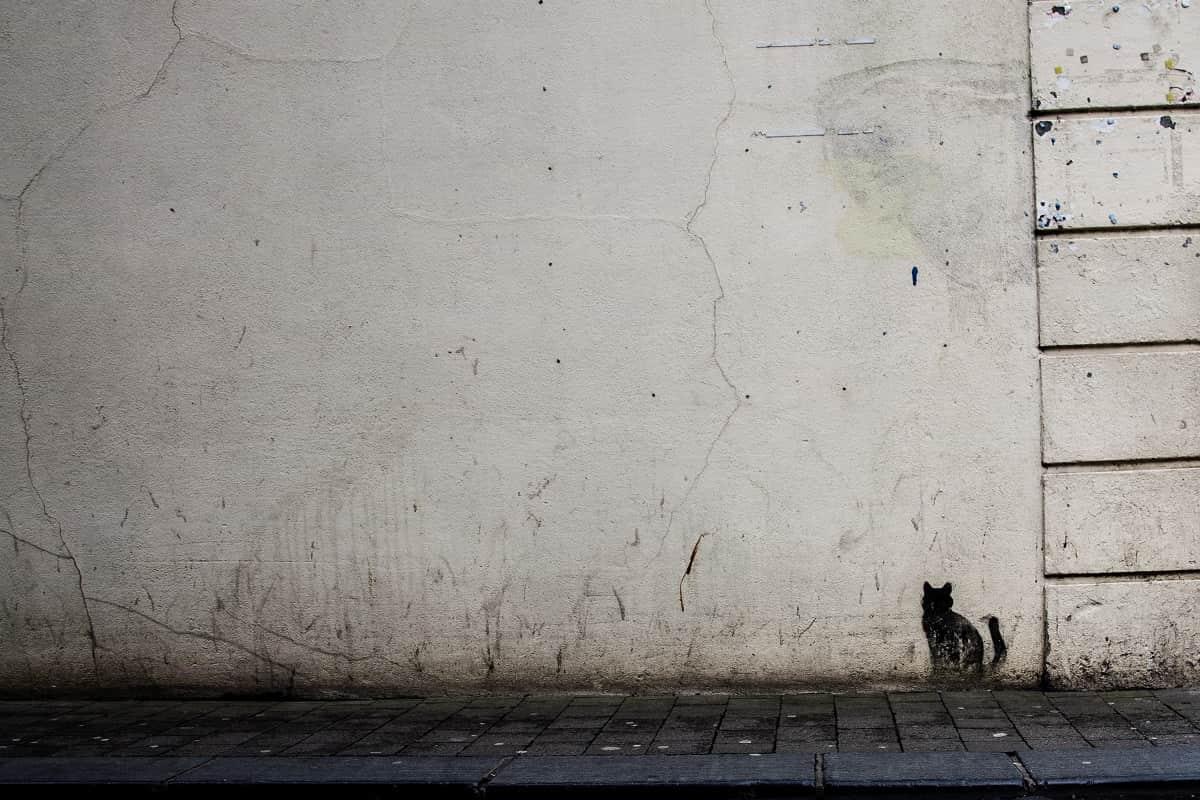 Die Plattform will die anarchistische Bewegung reorganisieren. Eine schwarze Katze an einer Mauer in Kilkenny, Irland. (Foto: Erika Lanpher, Unsplash.com)