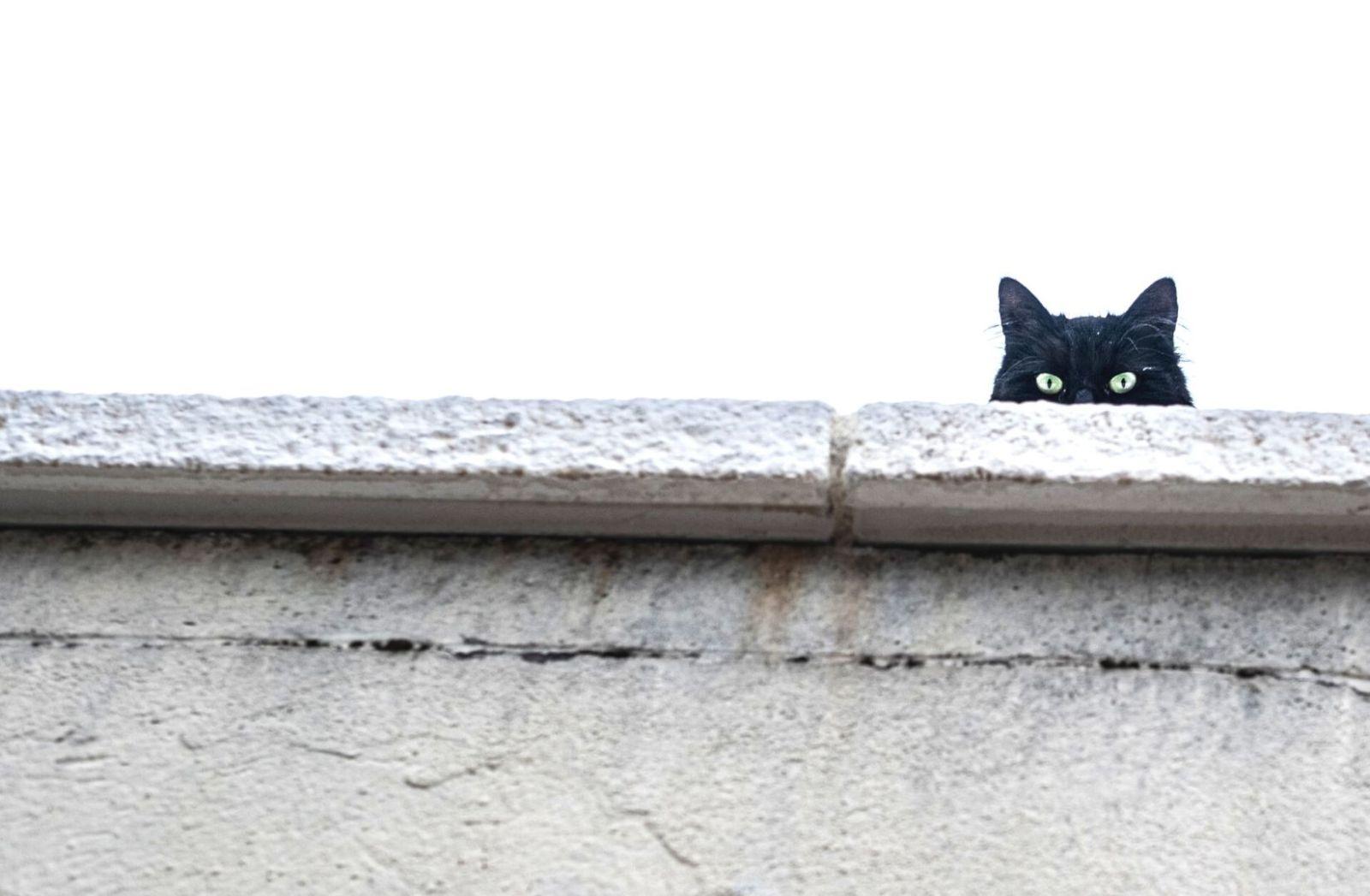 Regime Change ist ein Mittel aggressiver Politik. Misstrauen ist angeraten. (Symbolfoto: Clément Falize, Unsplash.com)
