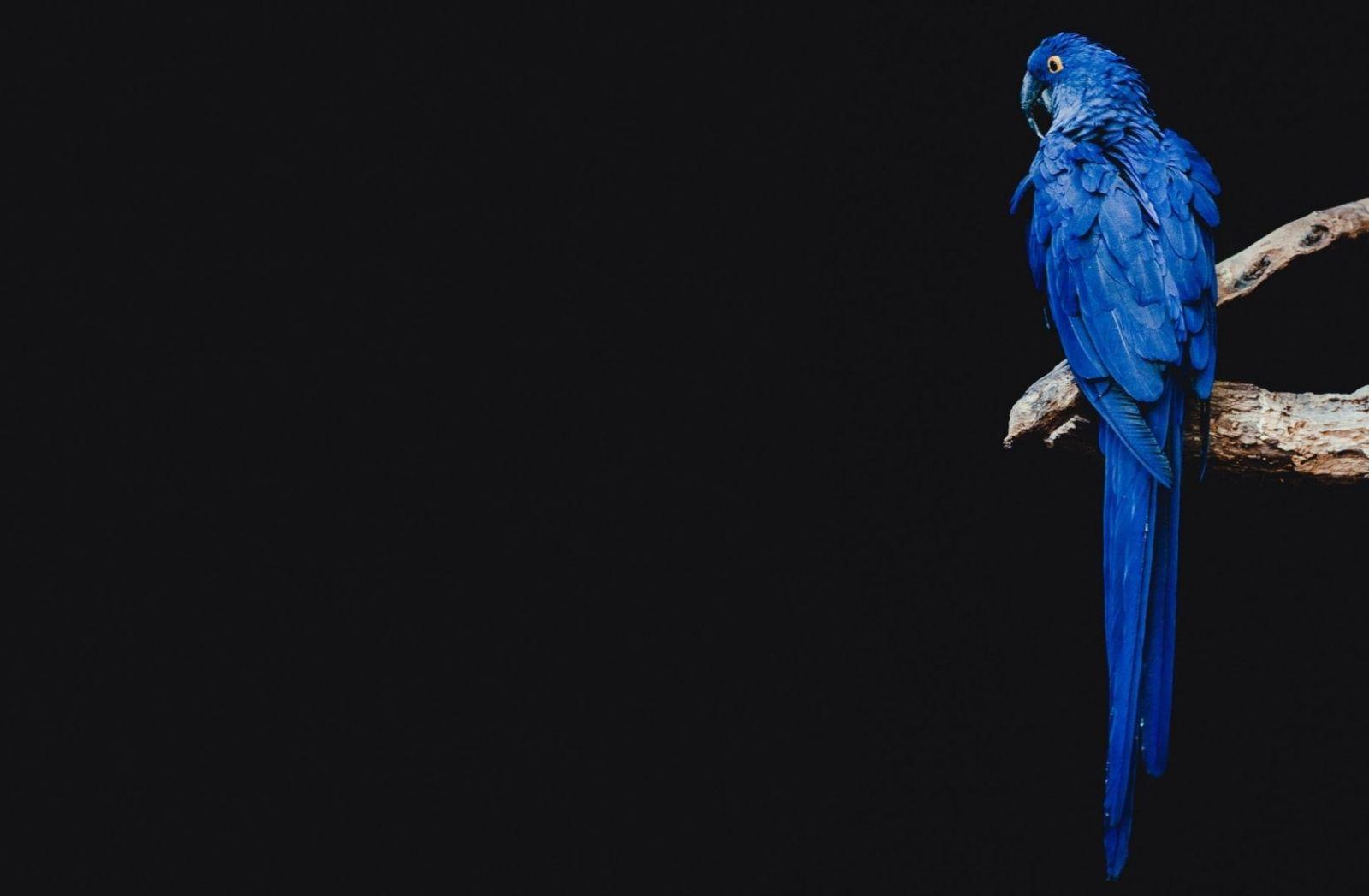 Ein Papagei schaut ins Nichts im Forth Worth Zoo. (Foto: Dominik Lange, Unsplash.com)