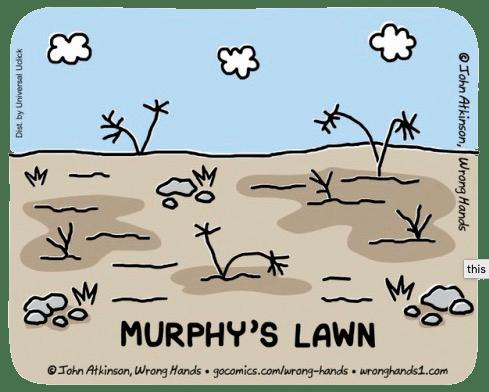Murphy's Lawn ©John Atkinson