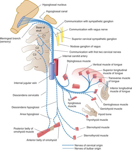 Cranial Nerves And Pathways Neupsy Key