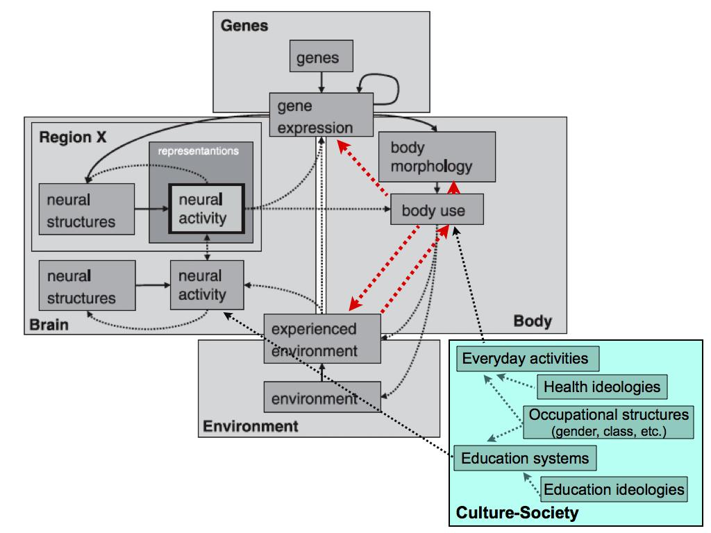 Figure from Westermann et al. 2007, modified by Downey