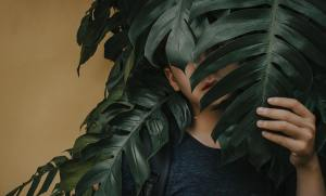 A child hiding his face behind a large dark green leaf