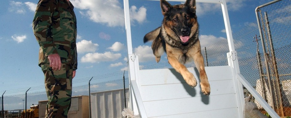 Soldier training a dog to jump through a hole in a fence.