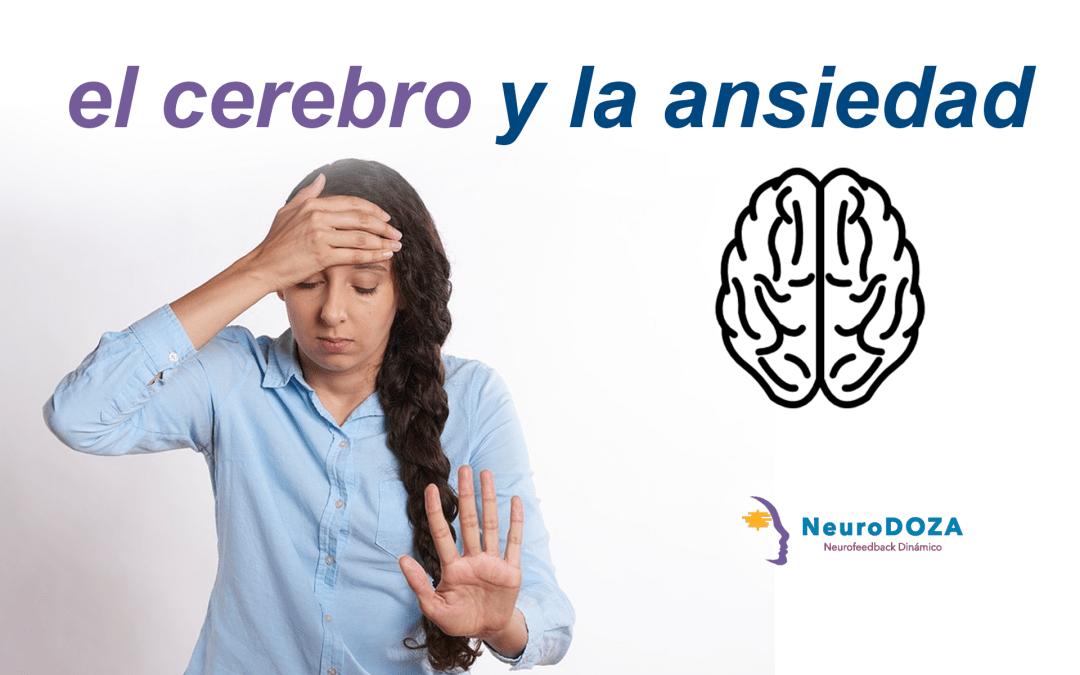 Que Le Pasa Al Cerebro Cuando Sufres Ansiedad Neurodoza