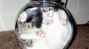 ¿Por qué la curiosidad mató al gato? Circuitos de recompensa y la potenciación del aprendizaje por la curiosidad