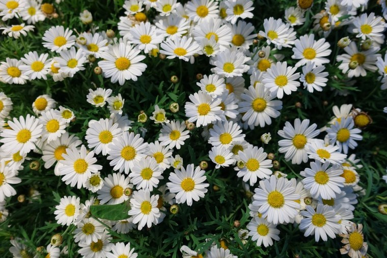 flowers-2413649_960_720