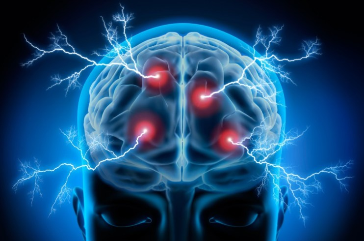 neurociencia cerebro