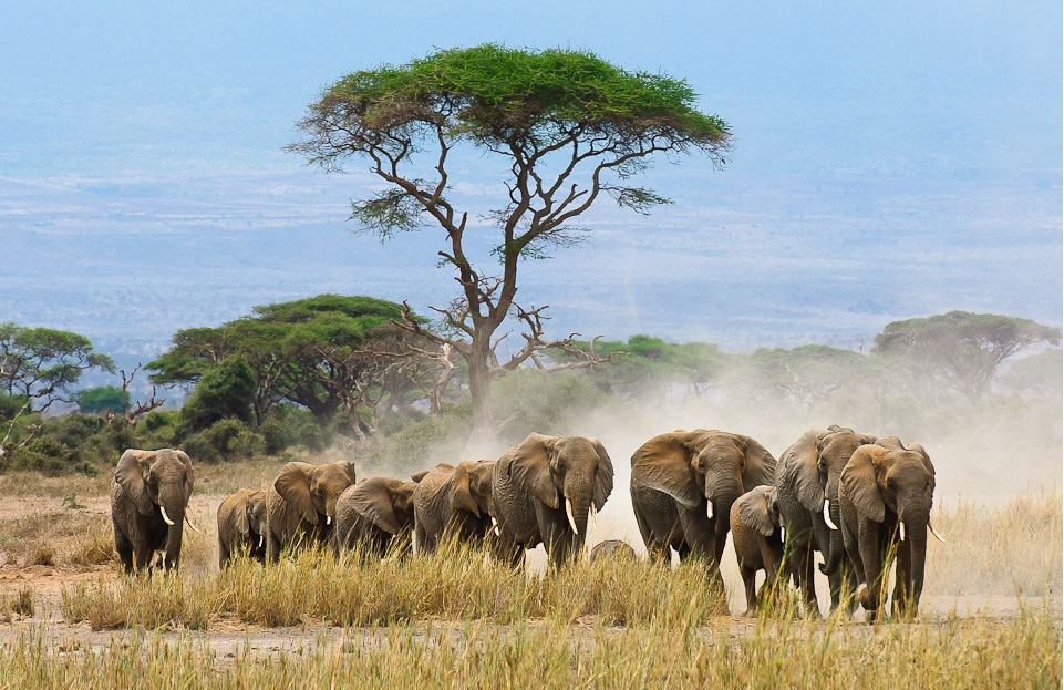 How AI Can Prevent Poaching Activities