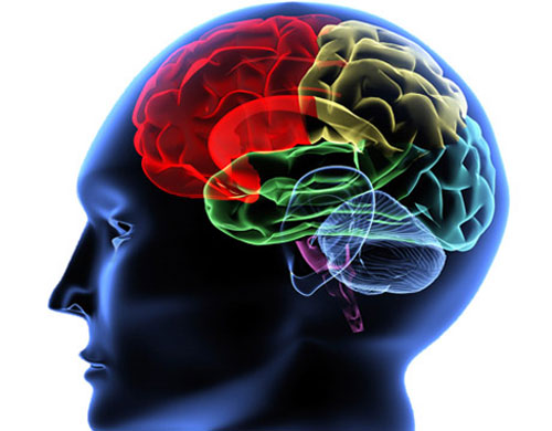 Cuba and Russia Assess Joint Projects on Neuroscience