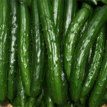 How a Japanese cucumber farmer is using deep learning and TensorFlow