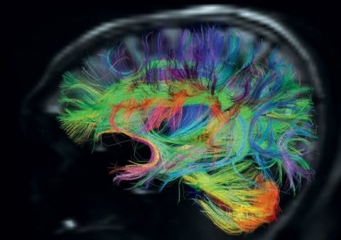A New Collaborative in Neuroscience