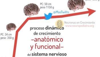 El cerebro zurdo (y el lenguaje) – neuronas en crecimiento